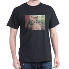 Alpaca Giving Raspberries T-Shirt