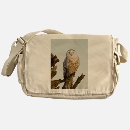 Snow Owl Messenger Bag