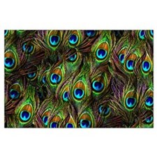 Peacock Feathers Invasion Large Poster