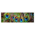 Peacock Feathers Invasion Sticker (Bumper 50 pk)