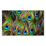 Peacock Feathers Invasio Sticker (Rectangle 50 pk)
