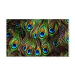 Peacock Feathers Invasion Rectangle Car Magnet