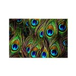 Peacock Feathers Invas Rectangle Magnet (100 pack)