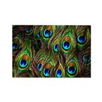 Peacock Feathers Invasi Rectangle Magnet (10 pack)