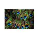 Peacock Feathers Invasion Rectangle Magnet
