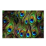 Peacock Feathers Invasion Postcards (Package of 8)
