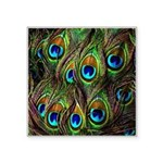 Peacock Feathers Invasion Square Sticker 3
