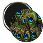 Peacock Feathers Invasion 2.25