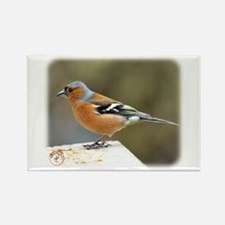Chaffinch 8R86D-23 Rectangle Magnet