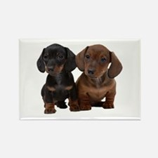 Dachshunds Rectangle Magnet