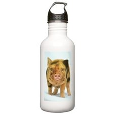 Messy micro pig Sports Water Bottle