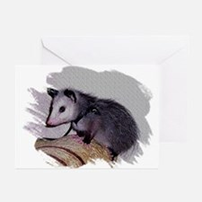 Baby Possum Greeting Cards (Pk of 10)
