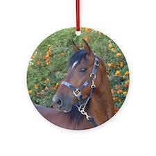 horse Round Ornamentmorgan plaid halter