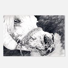 Grey arabian stallion Postcards (Package of 8)