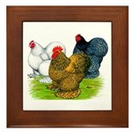 Assorted Cochins Framed Tile