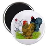 Assorted Cochins Magnet