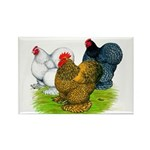 Assorted Cochins Rectangle Magnet (10 pack)