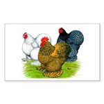 Assorted Cochins Rectangle Sticker