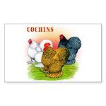 Cochins Trio Rectangle Sticker