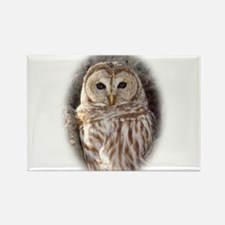 BarredOwl.jpg Magnets