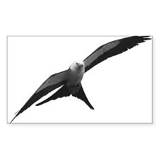 Swallow-Tailed Kite Decal