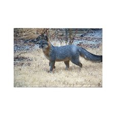 Gray Fox in Winter Rectangle Magnet (100 pack)