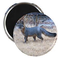 "Gray Fox in Winter 2.25"" Magnet (100 pack)"