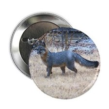 """Gray Fox in Winter 2.25"""" Button (100 pack)"""