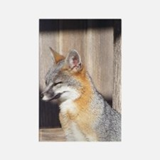 Sleepy Gray Fox Rectangle Magnet