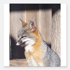 "Sleepy Gray Fox Square Car Magnet 3"" x 3"""