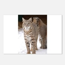 bobcats Postcards (Package of 8)