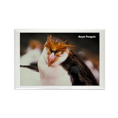 Royal Penguin Rectangle Magnet (10 pack)