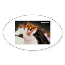 Royal Penguin Oval Decal
