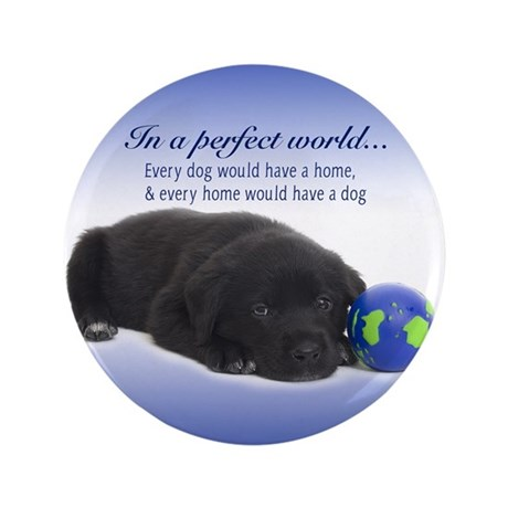 "In A Perfect World (Lab) 3.5"" Button (100 pac"