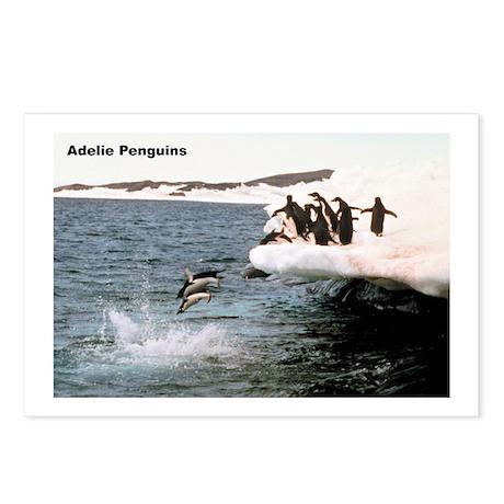 Adelie Penguins Postcards (Package of 8)