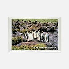 King Penguins Rectangle Magnet