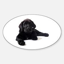 Labrador Retriever Sticker (Oval)
