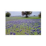 Texas bluebonnet Magnets