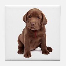 Chocolate Labrador Puppy Tile Coaster