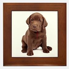 Chocolate Labrador Puppy Framed Tile