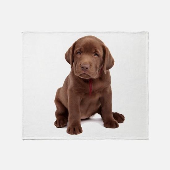 Chocolate Labrador Puppy Throw Blanket