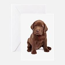 Chocolate Labrador Puppy Greeting Cards (Pk of 10)