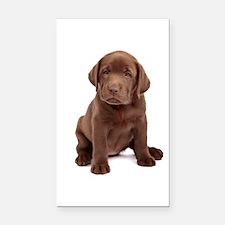 Chocolate Labrador Puppy Rectangle Car Magnet