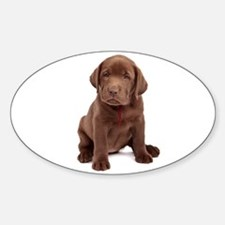 Chocolate Labrador Puppy Sticker (Oval)