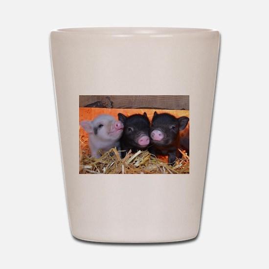 THREE LITTLE PIGS Shot Glass