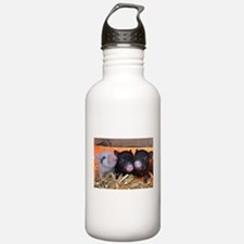 THREE LITTLE PIGS Sports Water Bottle