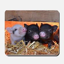 Three Little Piggies Mousepad