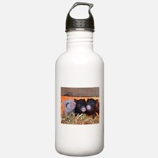 Three Little Piggies Sports Water Bottle