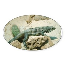 spiny-tailed iguana Oval Decal