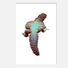 spiny-tailed lizard Postcards (Package of 8)